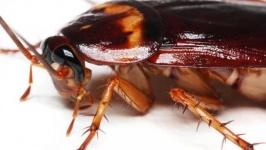 Има ли ефект от пръскане срещу хлебарки?